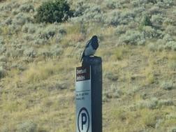 Yellowstone Bird